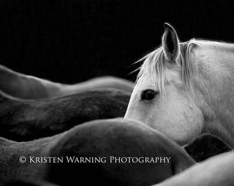 Horse Photos, Equine Art, Black and White Photography, The Look, Equines, Horses, Fine Art