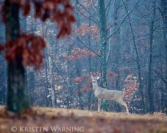 Deer Photos, Deer Pictures, Deer, Nature Photography, Pictures of Deer, Buck, Fall Pictures