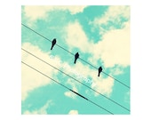 Birds on Wire photo. Bird...