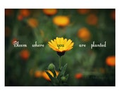 Bloom Where You Are Plant...