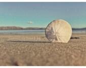 Sand Dollar Photography. ...