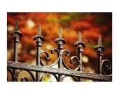 Autumn photography. fall ...