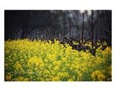 Landscape Photography. Na...