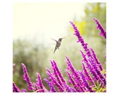 Hummingbird photography. ...