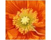 Poppy Photography. Orange...