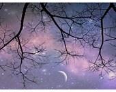 Starry Night Photo. Tree ...