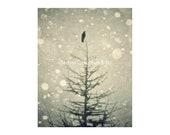 Winter Photography. Bird ...