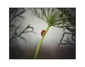 Ladybug Photography. Inse...