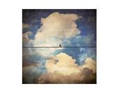 Bird Photo. Bird on Wire....