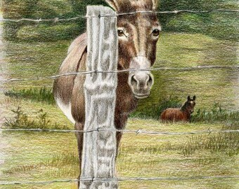 Well Hidden- a color pencil drawing from artist Wendy Leedy's donkey collection- fine art print, signed