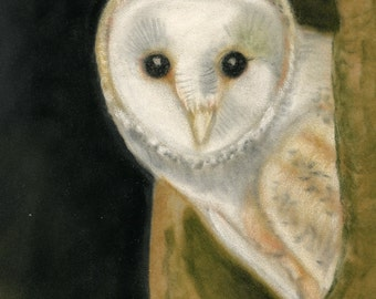 Barn Owl- a pastel drawing from artist Wendy Leedy's wildlife collection- fine art print, signed