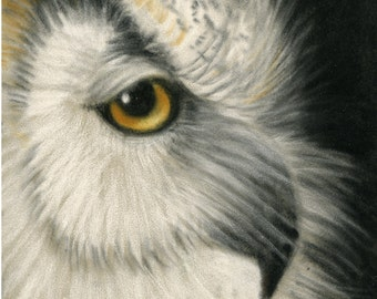 Owl- a pastel drawing from artist Wendy Leedy's wildlife collection- fine art print, signed