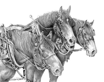 Workin' Women- a graphite pencil drawing from artist Wendy Leedy's horse collection- fine art print, signed