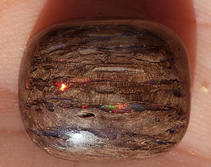 11.7 Ct. Virgin Valley Nevada Wood Opal - Rare Stone