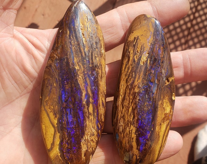 835 Ct. Koroit Boulder Opal Display Specimens - Wood Replacement - Two Huge Pieces