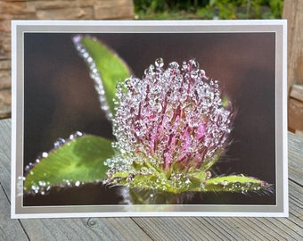 Dewy clover greeting card pearlescent art print