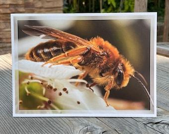 Mining bee greeting card pearlescent art print