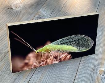 Green lacewing organic bamboo mount art print