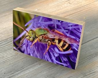 Green bee organic bamboo mount art print