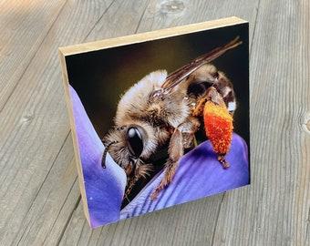 Digger bee organic bamboo mount art print