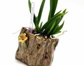 Ceramic Succulent Orchid Cactus Planter, Pottery Ladybug Flower Pot Vase Container Fairy Garden Art, Housewarming Gardener Gift, USA Made
