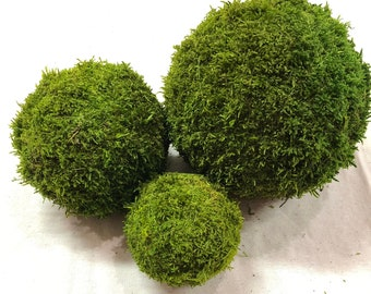 Dried Green Floral Moss Sheet Moss or Any Craft or Floral Project Pack of 8 OZ-Preserved Sheet Moss Natural for Fairy Gardens NAT//Green Sheet Moss Terrariums