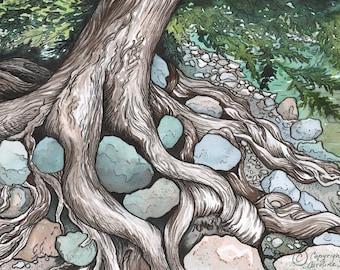 Watercolour print, Bromley Rock Cedar, tree art, forest, forest art, wilderness art, watercolour tree, British Columbia, nature painting