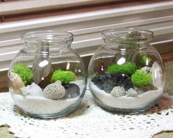 Terrarium set, Beach Terrariums, Beach Decor, Terrarium, Moss Terrarium, Ancient Coral, Birthday Present, Present for Him,Office Decor