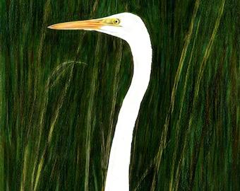 Egrets, Great Egret