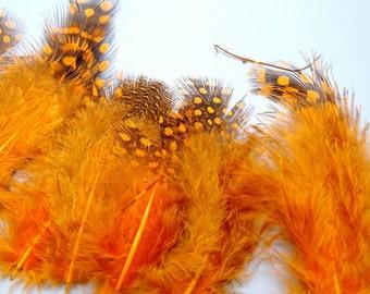 """Orange Guinea Feathers-1""""-3""""-25 PCS"""