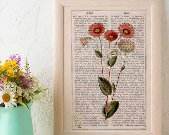 Wild flowers collection Print on Vintage Dictionary Book page,Pink Dasy  Wild flora art, Wall art naturalist illustration  BFL221