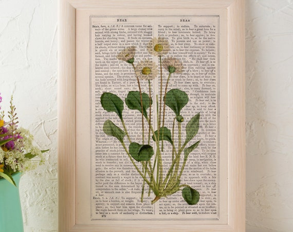 Wild flowers on Vintage Dictionary Book page, White dasy  Wild flora art, naturalist illustration  BFL219