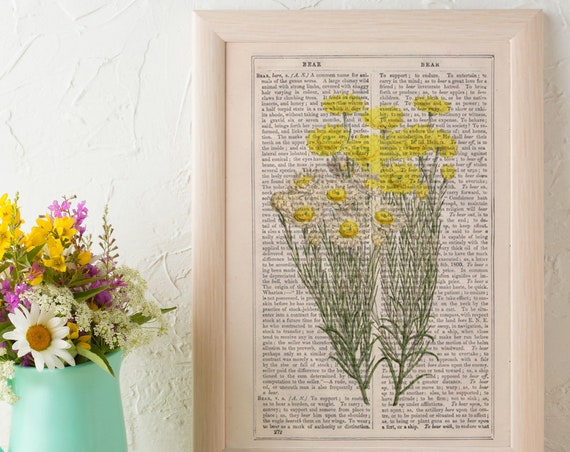 Wild dasy flowers collection Print on Vintage Dictionary Book page, Wild Dasy  Wild flora art, Wall art naturalist illustration  BFL224