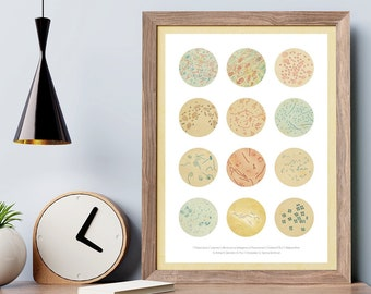 Bacteria Collection Earth Tones. Science Art, Science student gift.  microbiology, biology art,  print, science decor, science gift SKA277
