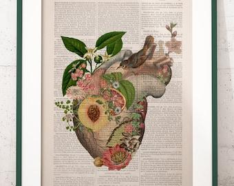 Wall art print Juicy Heart - Nature Anatomy- Anatomy Illustration- Anatomy Print- Love Wall Art- Anatomical Heart - Heart with bird - SKA286