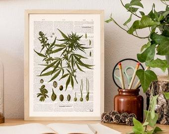 Cannabis Botanical Prints, Vintage Cannabis Art, Vintage scientific Illustrations, Herb Wall art Weed Ganja Marijuana Giclée Prints BFL271