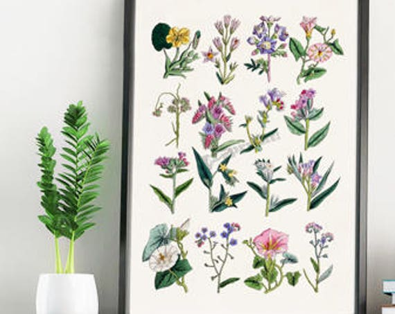 Wild soft colour flowers collection wall decor BFL215WA4