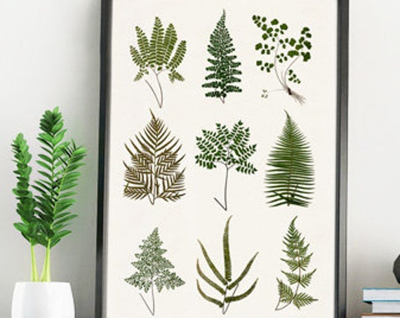 Christmas gifts for mom Wild ferns collection, Wall art decor, Giclee print wall decor, Green nature study, Art Poster, BFL223WA4