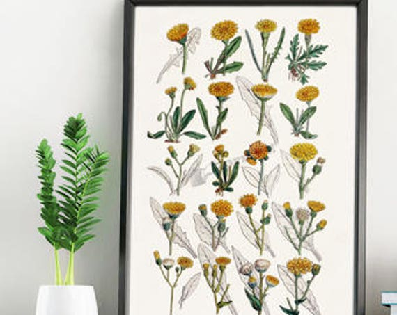 Dandelion Wild flower collection white paper print  BFL214WA4