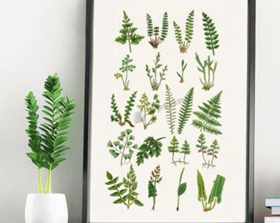 Nature Ferns Botanical wall poster BFL213WA4