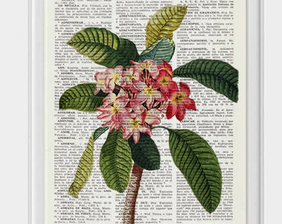 for mom Plumeria Flower book print Floral Book print Upcycled book page, wall art book frangipani exotic flower art BFL217