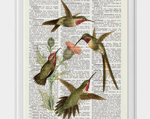 Christmas gifts for her Hummingbirds on cardoon flowers Print on Dictionary page Art, Hummingbird  Upcycled book Perfect giclee ANI250