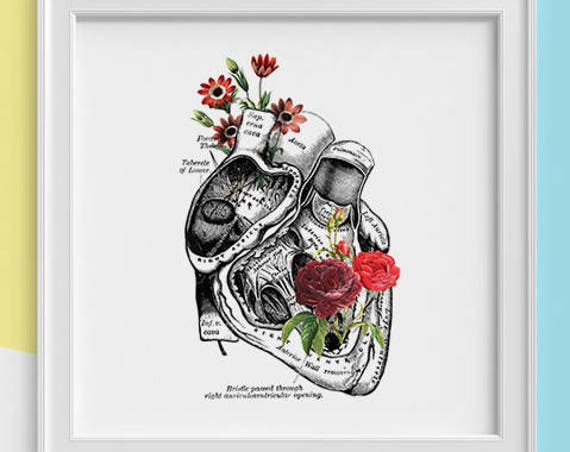 Human Heart with roses Print Human anatomy print Science student gift, Human heart, art print, Anatomy with flowers SKA080SQ1