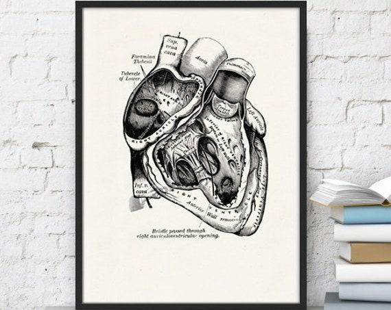 Human Heart in black Science prints wall art Anatomy prints the best choice for Christmas gifts  SKA039WA4b