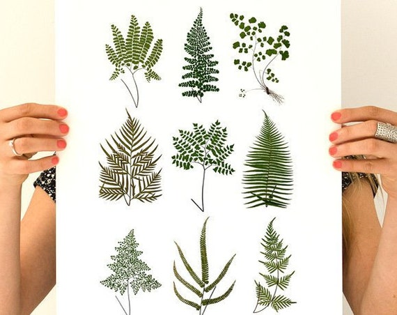 Wild ferns Poster print, Green ferns Poster, Green plants decor, Ferns art, Wall art decor, Wild plants art, Housewarming gift, WP230WA3