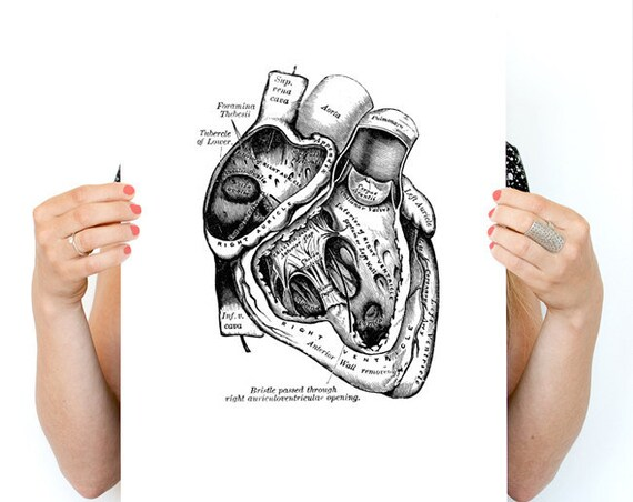Human Heart Poster,  anatomy art, wall art, wall decor, poster, anatomy, anatomy poster,  medical art, SKA039WA3