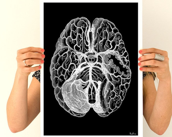 Human brain, black poster, anatomy art, brain art, brain, anatomy, wall art, wal decor, poster, science, medical art,anatomy decor SKA125WA3
