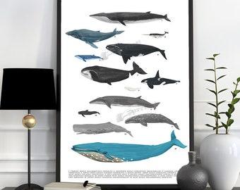 Whales chart A3 size poster, animal art, Wall art ,Nursery art , Giclee poster, Ocean Animal art, Sea life poster print SEA219WA3