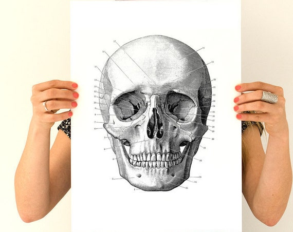 Human skull Poster,  Anatomy art, Skull art, Poster art, Wall art, Walldecor, Gift for medical student,  SKA011WA3