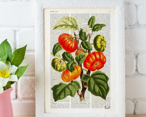 Tomato Plant Vintage illustration print on Book page  - Collage art - Mixed media upcycled art BFL063